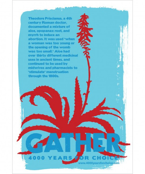 """Drawing of an aloe vera plant in red colour. On top of it is written """"Gather"""" in blue. In the background is written in blue, """"Theodore Priscianus, a 4th century Roman doctor, documented a mixture of aloe, apopanax root, and myrrh to induce an abortion. It was used 'when a woman was too young or the opening of the womb was too small.' Aloe had over thirty different medicinal uses in ancient times, and continued to be used by midwives and pharmacists to """"stimulate"""" menstruation through the 1800s."""""""