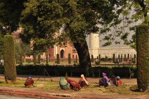Against the backdrop of the Taj Mahal, a field with trees and birds