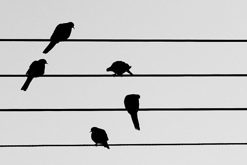 Silhouette of birds sitting on parallel wires.
