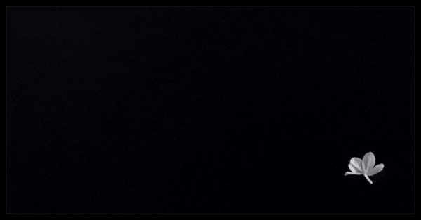 A small white flower on a bottom right corner of an otherwise completely black picture with a black-background.