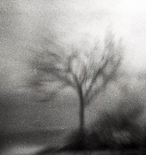 A hazy black-and-white picture of a branched tree swaying in a storm.