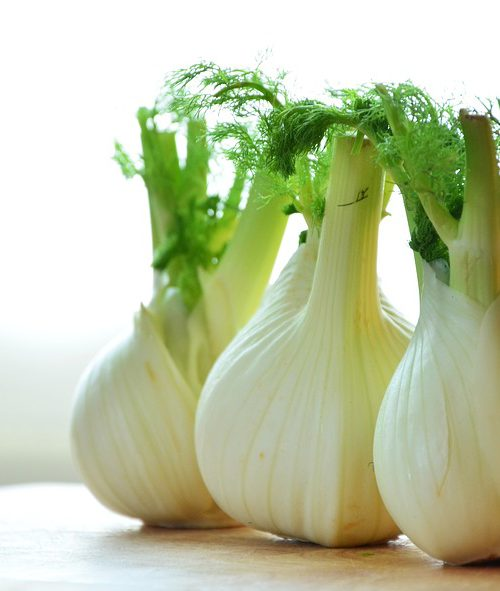 The queer muslim experience, symbolised by a picture of three pieces of fennel, kept one beside each other. they have a light green bulbous body and dark green leaves emerging from the stem.