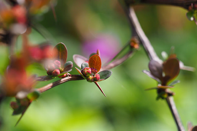 A pictures of the reddish-green leaves and branches of a plant, against a bright green background
