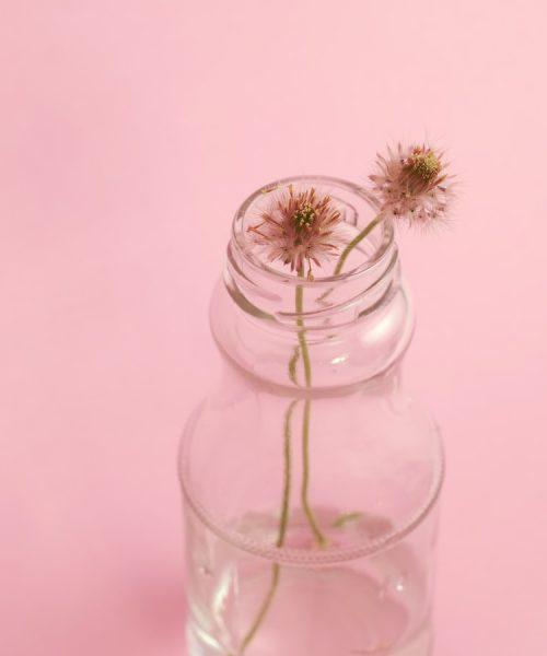 Two dandelion flowers in a glass vase on a pink background.