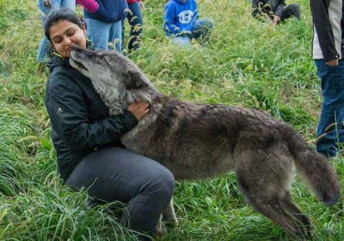 A photograph of MHI director Raj Mariwala; she is playing with a grey-brown dog, squatting in grass.